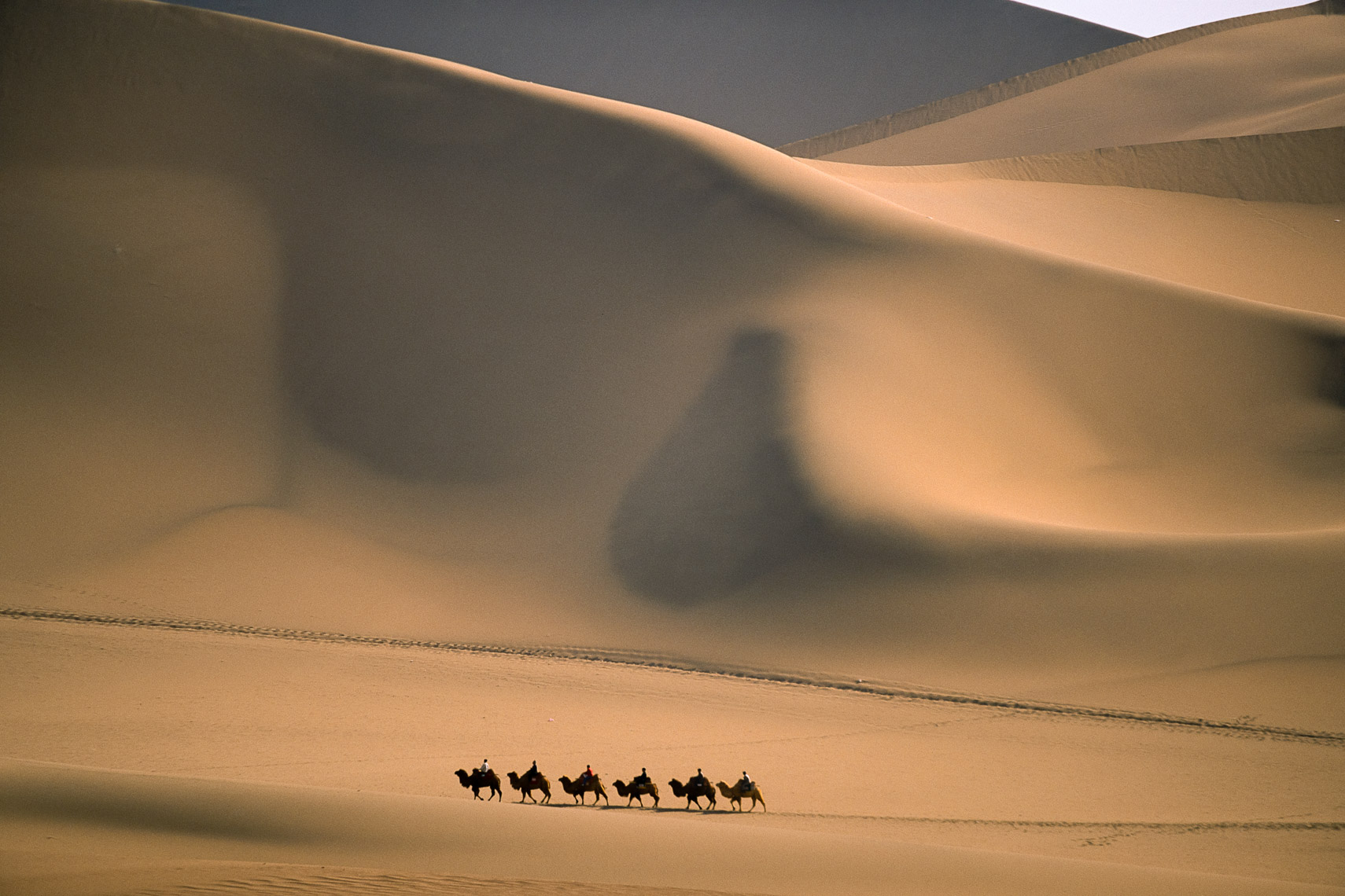 Camel train walking among giant sand dunes